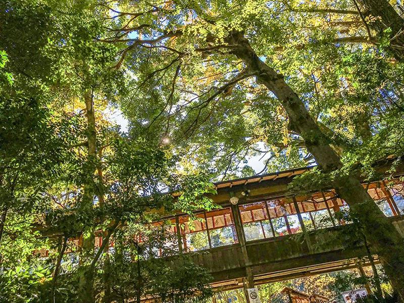 A nature-rich shrine next to Odawara Castle