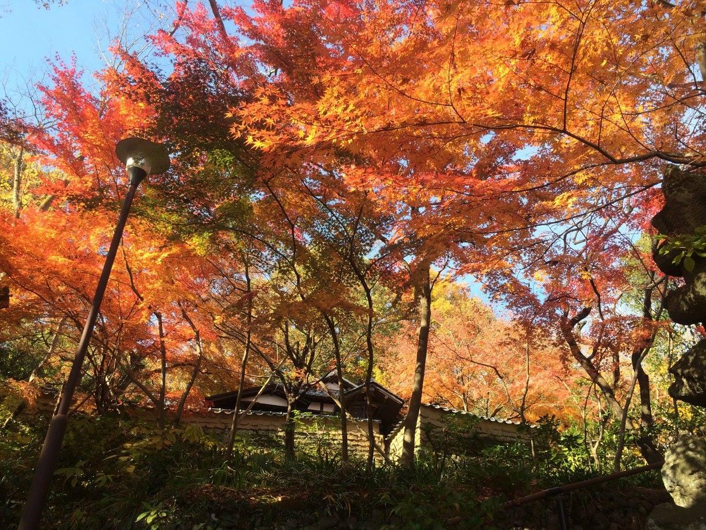 小田原の山