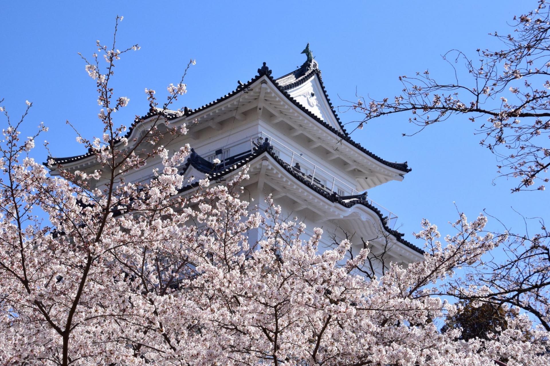 小田原城(Odawara castle)