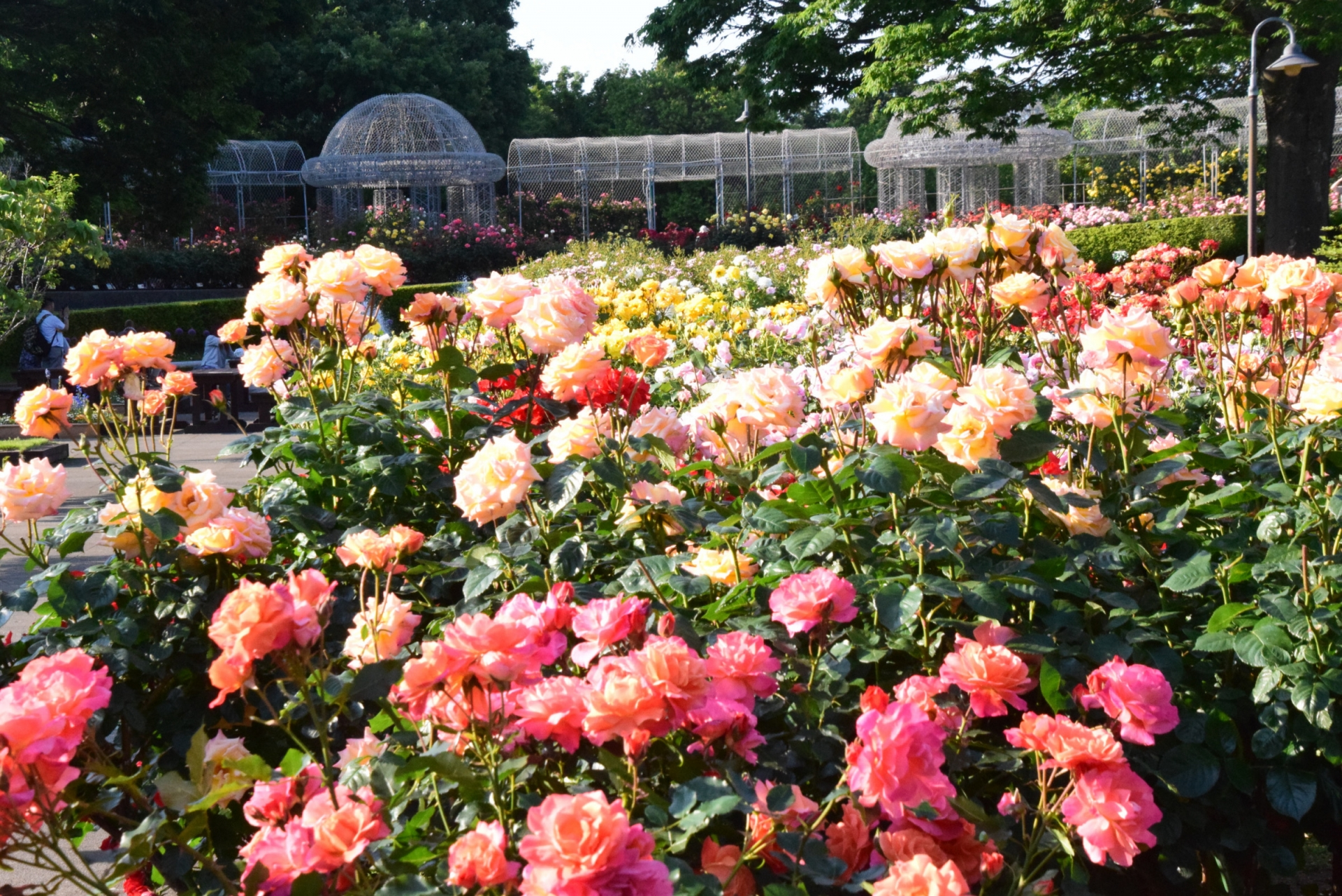 小田原フラワーガーデン(Odawara flower garden)